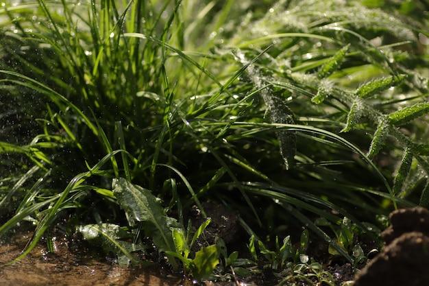 Planta verde em um dia ensolarado na chuva folhas molhadas perto do solo de grama e flores folhas frescas