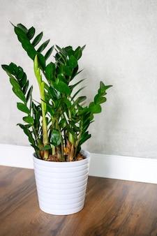 Planta verde em um grande vaso branco contra uma parede de concreto cinza e piso de madeira escura