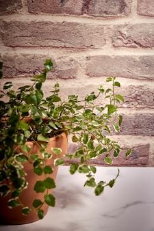 Planta verde em um pote de terracota com um fundo de tijolos avermelhados