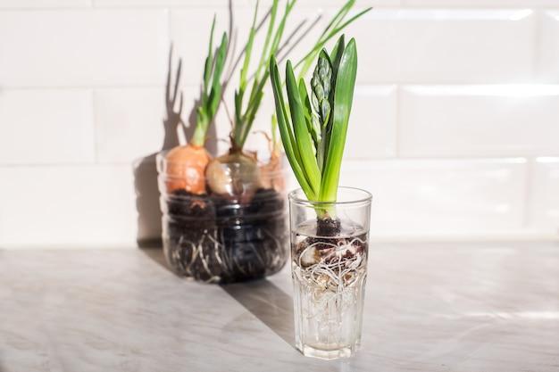 Planta verde em vidro na cozinha