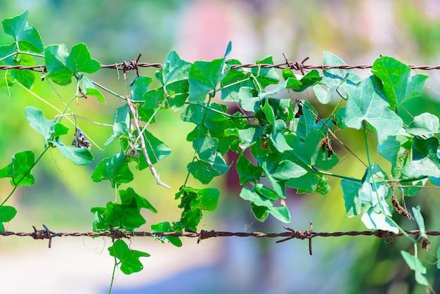 Planta verde enrolada em arame farpado