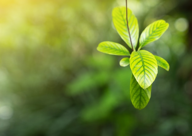 Planta verde natural na luz da manhã para o fundo da primavera, primavera, natureza verde