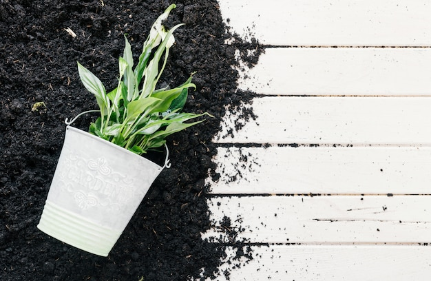 Planta verde no balde com o solo no banco de madeira