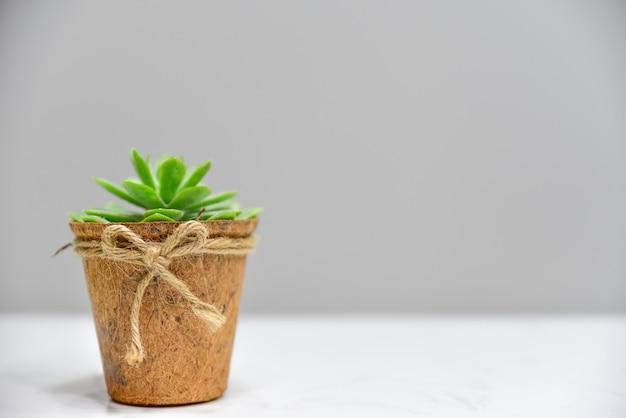 Planta verde no pote de madeira sobre a mesa branca e fundo cinza