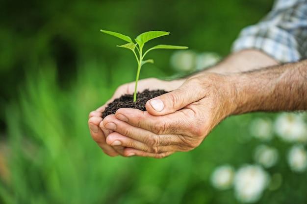 Planta verde pura com solo em mãos humanas no fundo