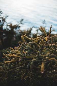 Planta verde sob nuvens brancas durante o dia