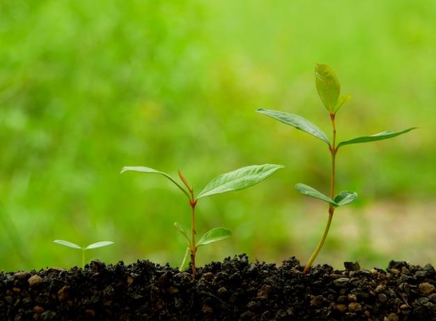 Plantação da agricultura que semeia a etapa crescente no solo no fundo verde da natureza. amor terra c
