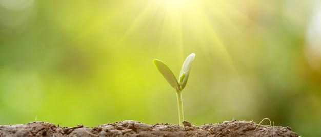 Plantação da agricultura que semeia o crescimento, conceito ascendente do growt do negócio. proporção de 21: 9