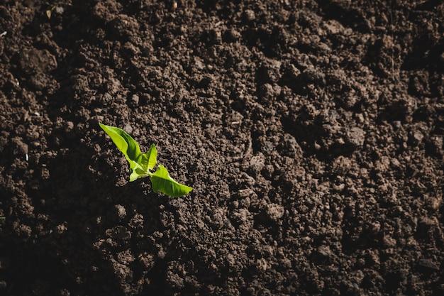Plantação de árvores dia mundial do amor. adicionando oxigênio ao ar. dia mundial do meio ambiente