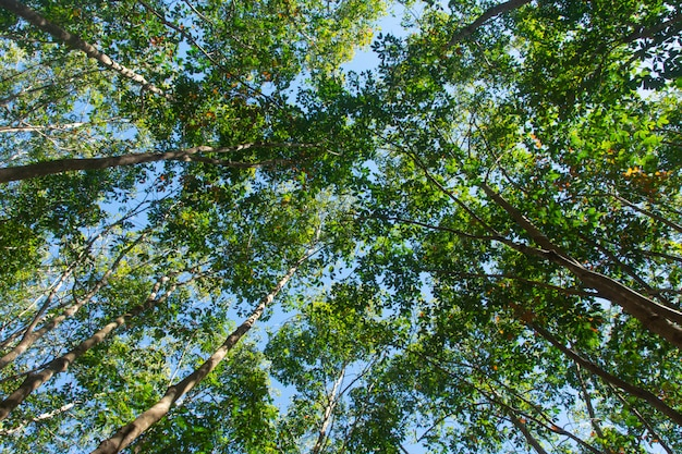 Plantação de árvores