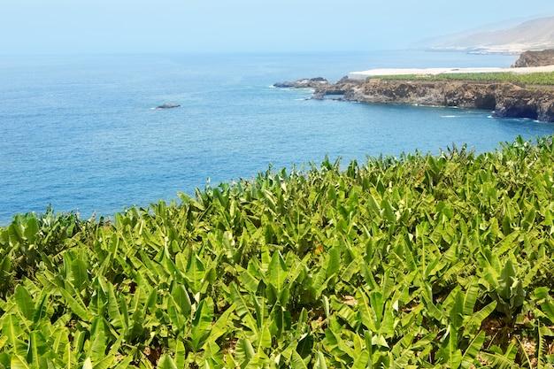Plantação de banana perto do oceano em la palma