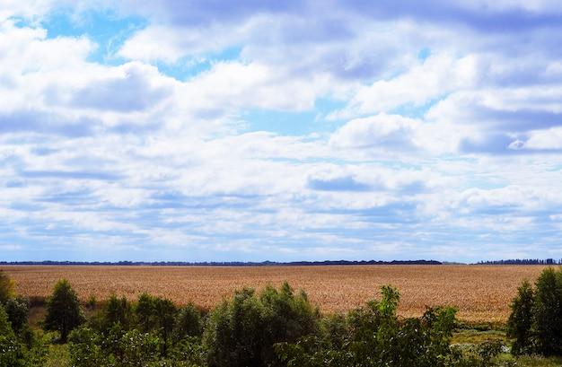 Plantação de campo de milho de outono e grandes nuvens no céu