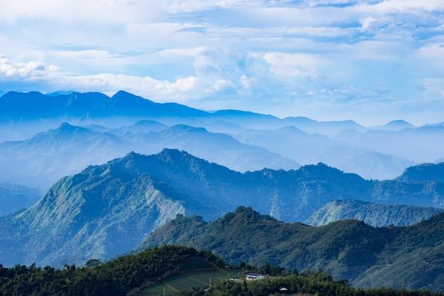 Plantação de chá e natureza da montanha em taiwan