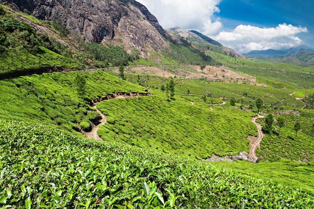 Plantação de chá em munnar