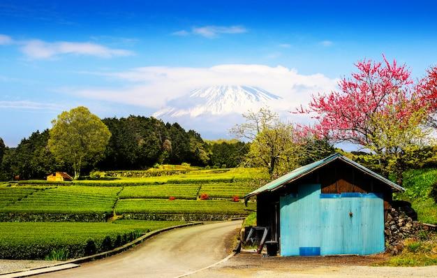 Plantação de chá na parte de trás com vista para o monte fuji
