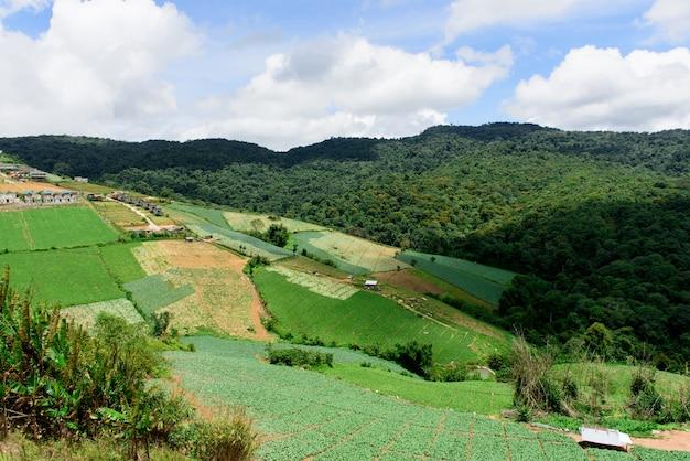 Plantação de montanha no fundo da natureza.