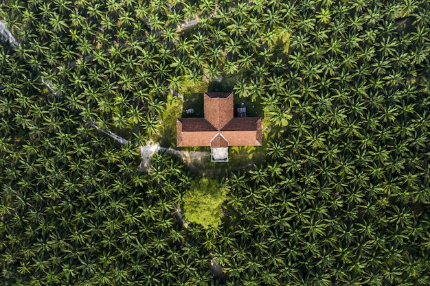 Plantação de palmeiras com casa