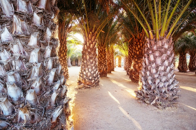 Plantação de palmeiras em ilha tropical