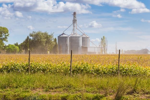 Plantação de soja no campo com silos desfocados no fundo