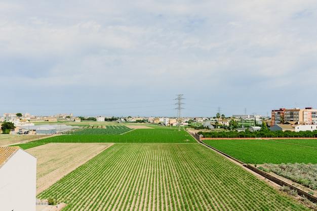 Plantação de tigernuts no pomar valenciano, perto das casas da cidade.