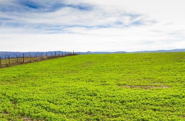 Plantação de trebol para forragem nas montanhas