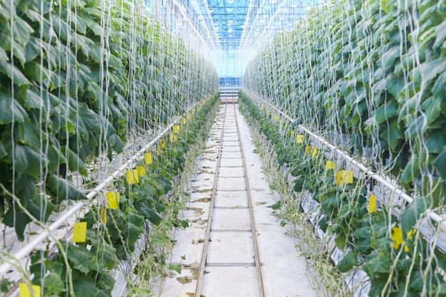 Plantação de vegetais moderna