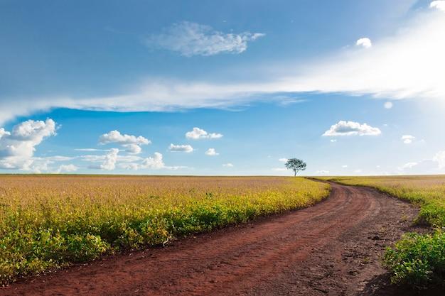 Plantação - paisagem de campo de soja verde agrícola, em dia ensolarado