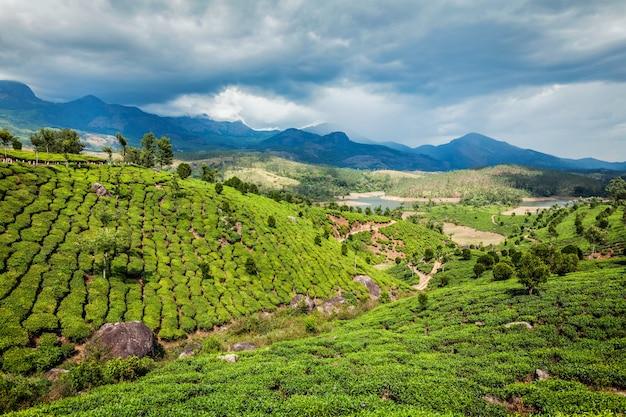 Plantações de chá em colinas nas montanhas do sul da índia ghats ocidental. munnar, kerala, índia
