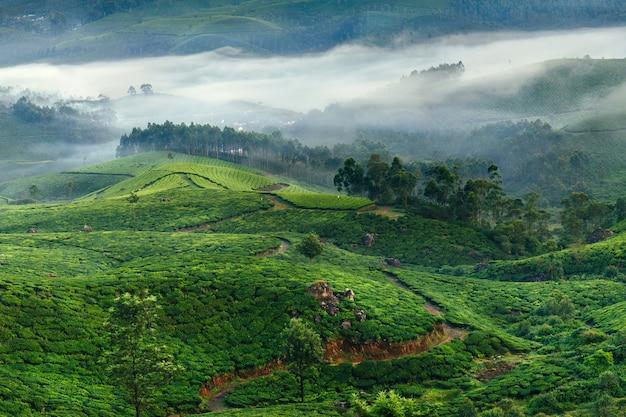 Plantações de chá nas montanhas em munnar
