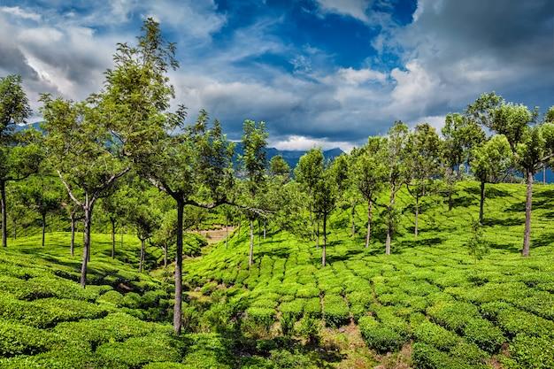 Plantações de chá nas montanhas