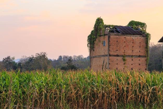 Plantações de milho e prédio abandonado