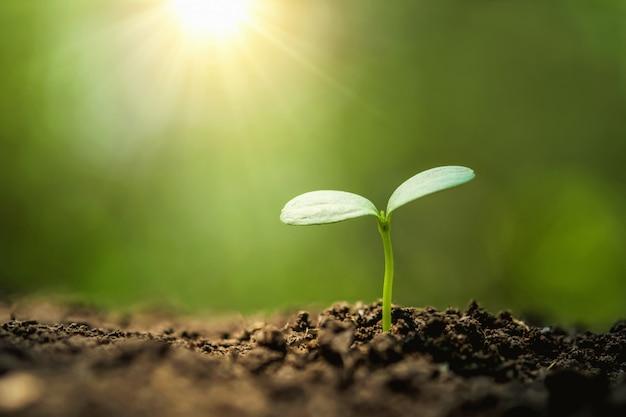 Plantando a árvore no jardim com o nascer do sol. conceito salvar mundo