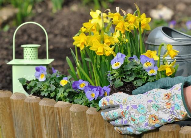 Plantando flores na primavera