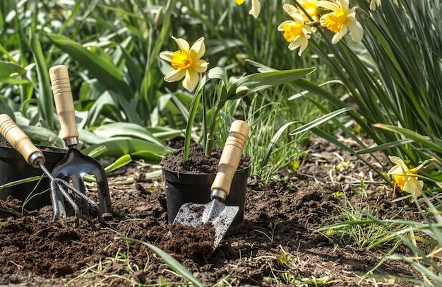 Plantando flores no jardim, ferramentas de jardim, flores