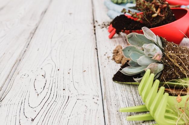 Plantando suculentas em vasos com solo japonês e pá