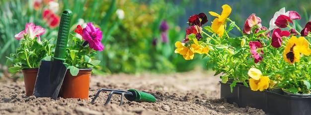 Plantando um jardim, primavera verão. foco seletivo.