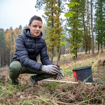 Plantar árvore jovem na floresta após vento devastador