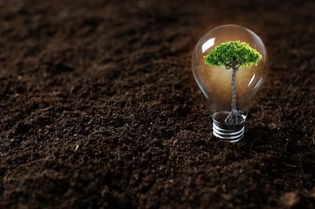 Plantar árvore, rebento crescendo em lâmpada