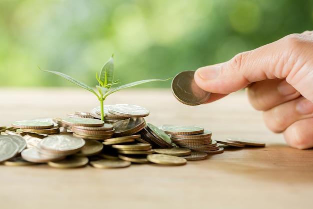 Plantar árvores em uma pilha de moedas com luz solar