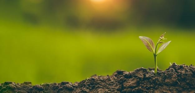 Plantar árvores para crescer no solo em fundo verde