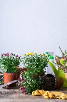Plantar e cultivar flores de outono, passatempo ecológico e conceito de lazer.