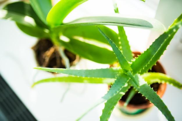 Plantar em casa janela em dia de sol