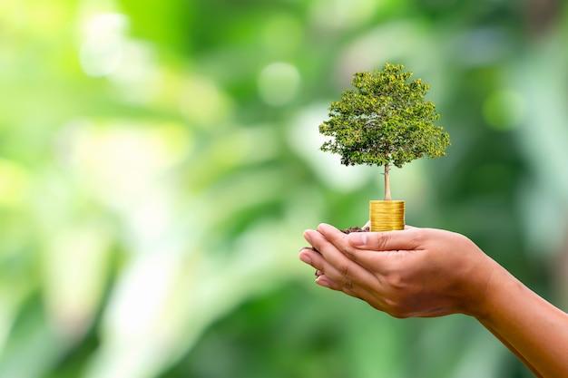 Plantar em moeda em mão humana e desfocar o conceito de crescimento de planta de fundo de natureza verde