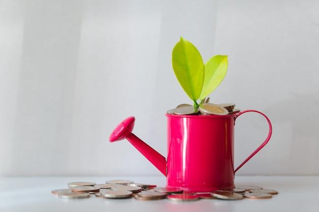Plantar em moedas de pilha no regador usando como crescimento financeiro e conceito de investimento de negócios