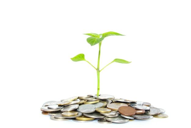 Plantar em moedas isoladas em branco