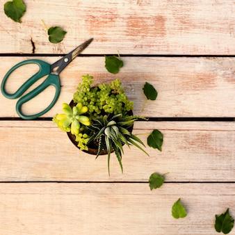 Plantar em uma panela ao lado de uma tesoura na mesa de madeira