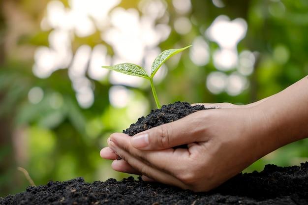 Plantar mudas com as mãos dos agricultores plantando mudas no conceito de solo de reflorestamento e proteção ambiental