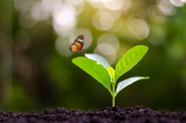Plantar mudas de plantas jovens à luz da manhã no fundo da natureza