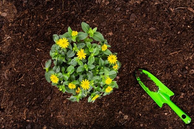 Plantar mudas jovens de salada de alface na horta.