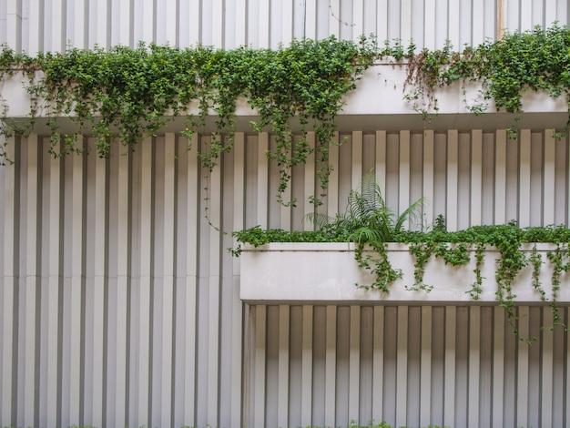 Plantar na parede